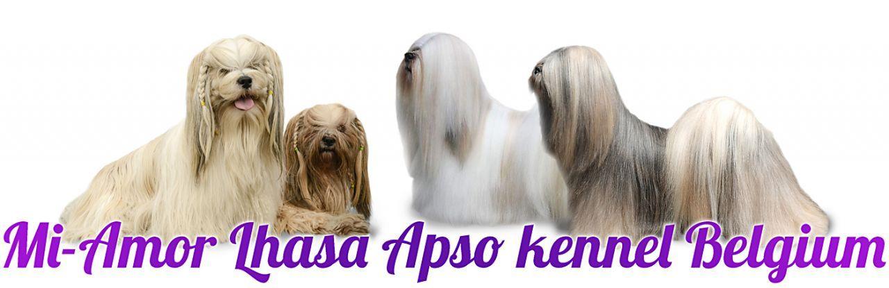 Welcome to Mi-Amor | Mi Amor Lhasa Apso Belgium