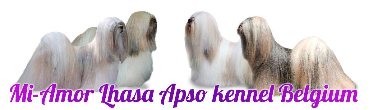 Welkom bij Mi-Amor Lhasa Apso kennel België | Mi Amor Lhasa Apso Belgium